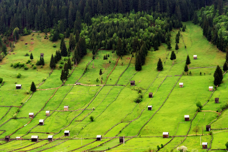 Aerial view of green fields in moldavia