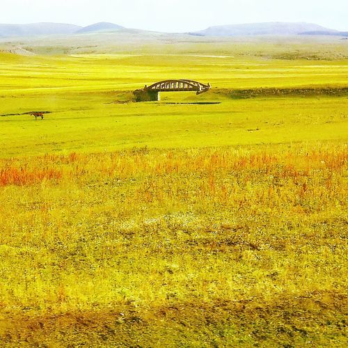 Natural Doğa Kartpostal Searche