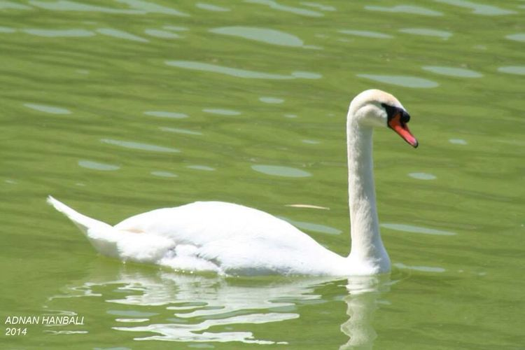 Animals Animal Animals In The Wild Animal_collection Animal Head  Animal Photography Lake Lake View Lakeside Lakes