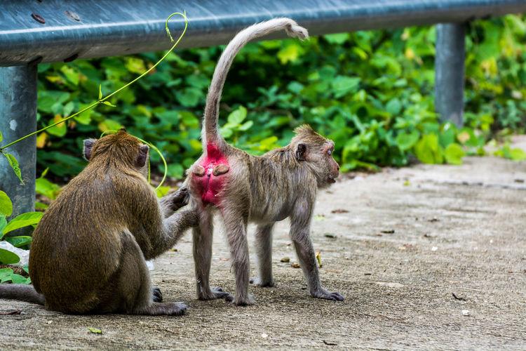 Monkey family on street