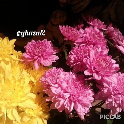 Flowers♥♥