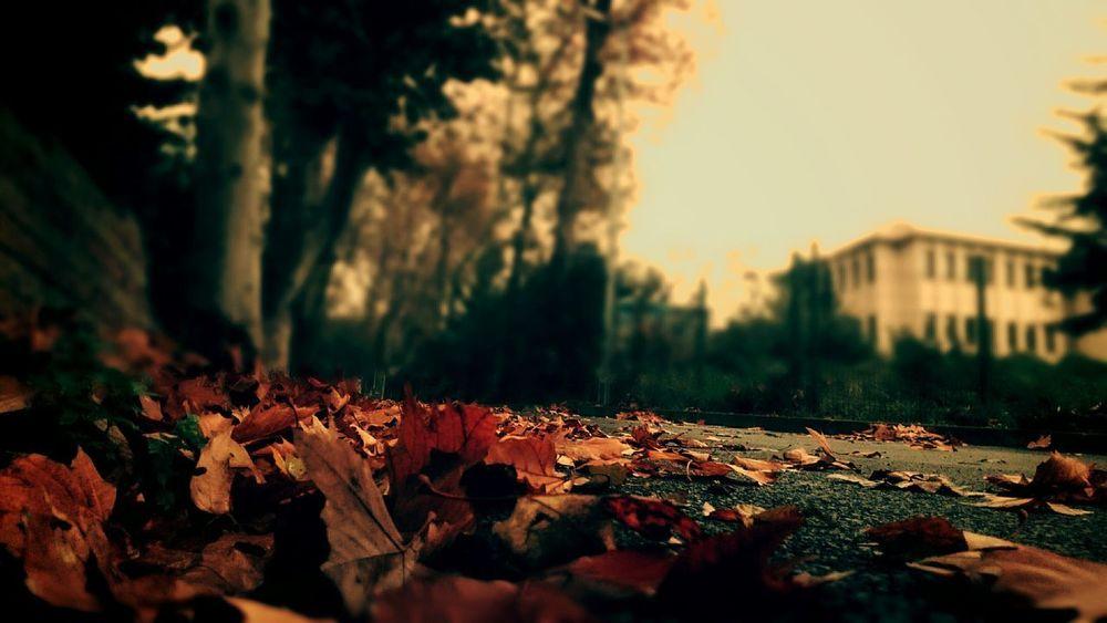 Istanbul Turkey Yol Road Yaprakdokumu Leaf 🍂