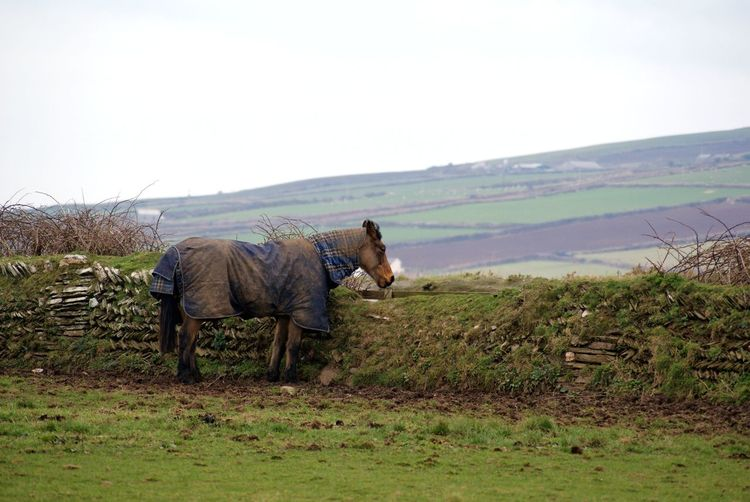 Landscape Animal Animal Wildlife One Animal Grass Mammal Nature Outdoors England Horse Cornwall Livestock Grazing
