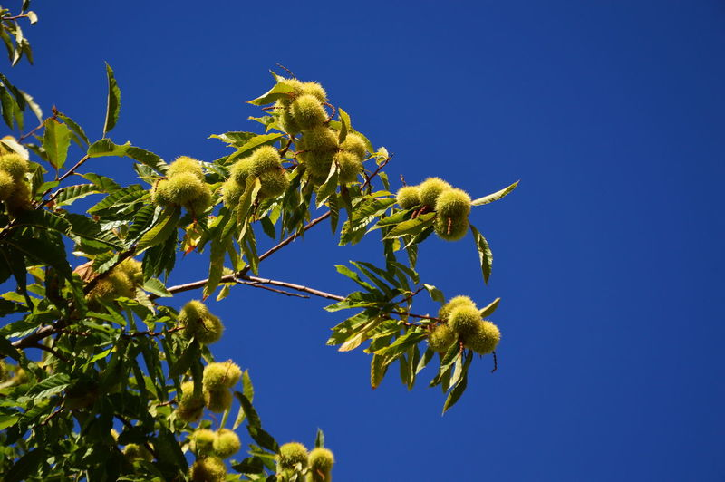 Low angle view of yellow flowering plant against blue sky