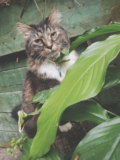 Pets Leaf Domestic Cat Leopard Portrait Feline Close-up Plant