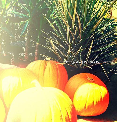 Pumkins Autumn Frutos D Otono Calabazas