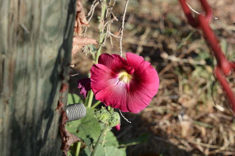 Flower Nature Outdoors Petal Beauty In Nature Fragility Visé Chaine Arbre Jpho06 Nikon Nikon D7100 EyeEmNewHere