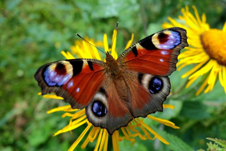 Close-up of butterfly on flower