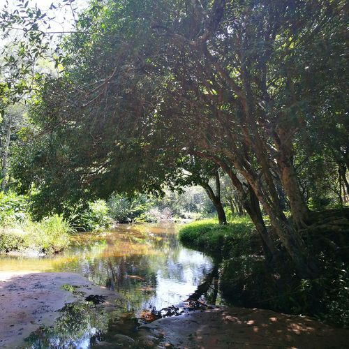 Escobar Paraguay ♥ Water Tree Day Nature Paradise On Earth Peaceful Place Beauty In Nature Landscape Non Filter Plant Green Outdoors