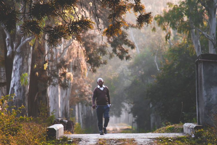 Man walking by trees in forest