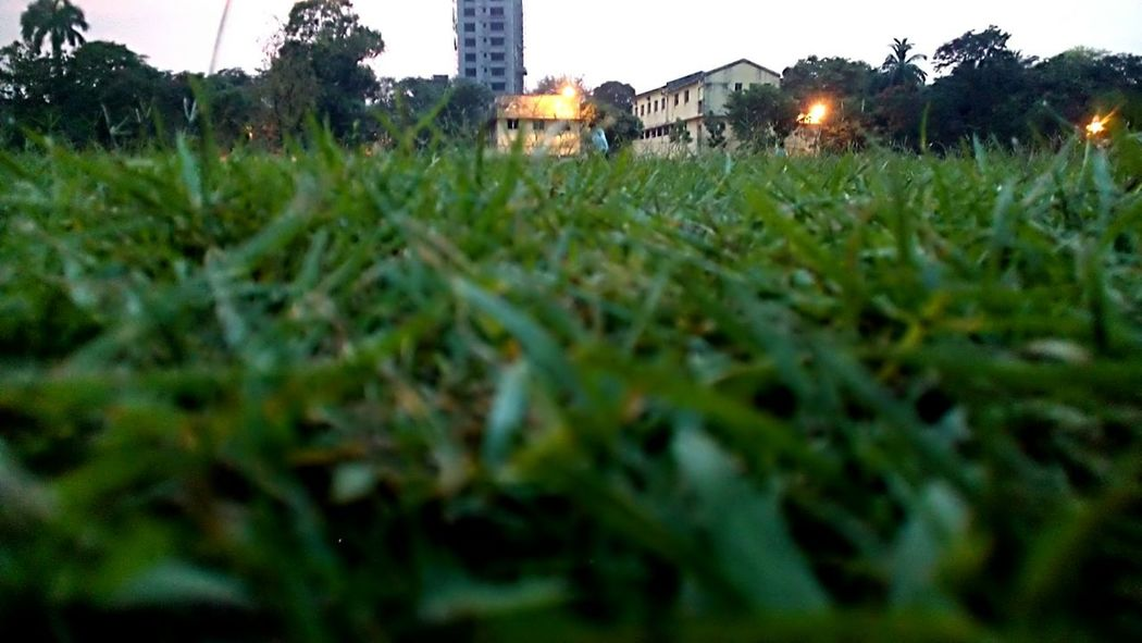 Grass Light And Shadow Scenery Dusk Micro8MP