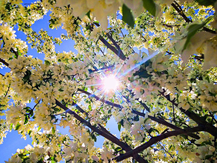 Low Angle View Full Frame Sunlight Lens Flare Backgrounds Day Sun No People Nature Tree Growth Beauty In Nature Outdoors Sky Close-up Freshness BigSkyCountry Check This Out 😊 Check This Out Montanamoment Beauty In Nature The Week On EyeEm Perspectives On Nature