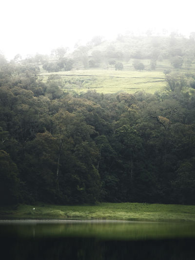 Scenic view of trees by lake during foggy weather