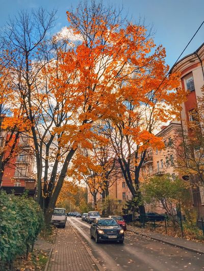 Transportation Car Tree Motor Vehicle Plant Mode Of Transportation Land Vehicle Autumn Nature Architecture Orange Color City Building Exterior Built Structure No People Day Road Street Growth Sky