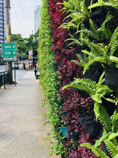 View of flowering plants in city