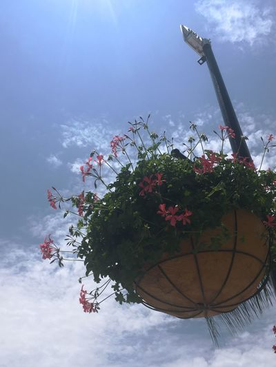 Flower Sky Nature Growth Beauty In Nature Cloud - Sky Day No People Water Outdoors Fragility Low Angle View Petal Freshness Blooming Tree Flower Head