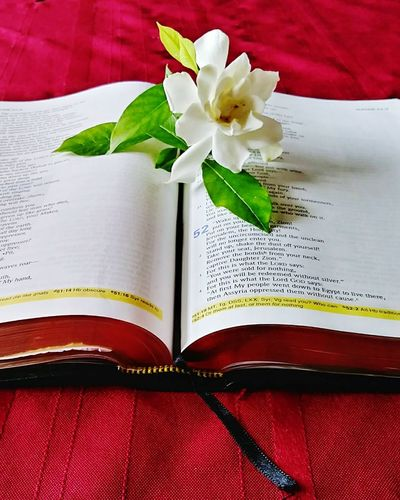 The Beauty of the Word Pages Scripture Books Wisdom Teaching Spirituality Love Yeshua Jehovahscreation Gardenia Open Book  Red Still Life Indoors  No People Open Close-up Textile Diary Day Inspirational Books Religion The Word Of God Cbkelley Photography Word Gardenia Flower Bible Study Flower Education