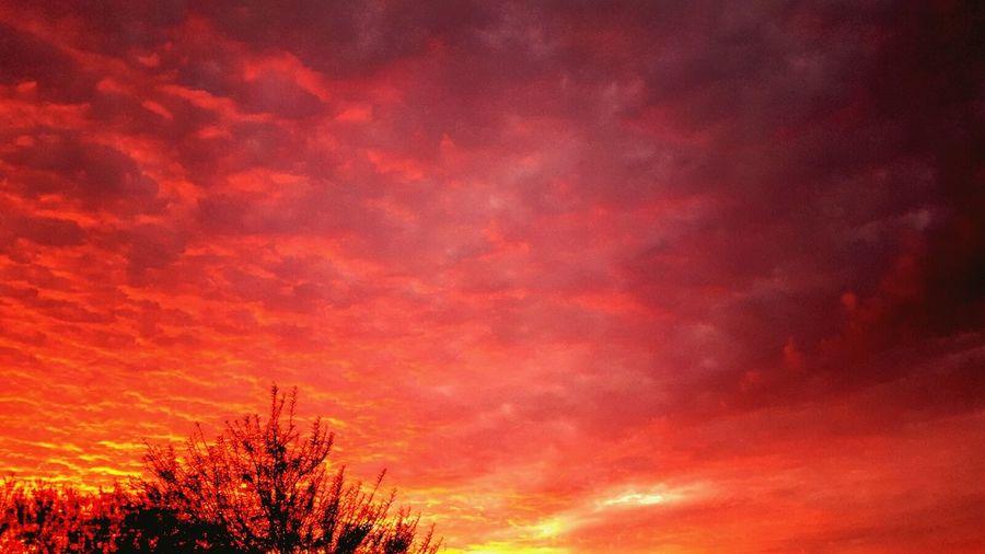 Arizona Sunsets