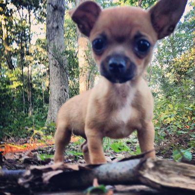 Dailyzigga my little guy Ziggy Bigguyoncampus