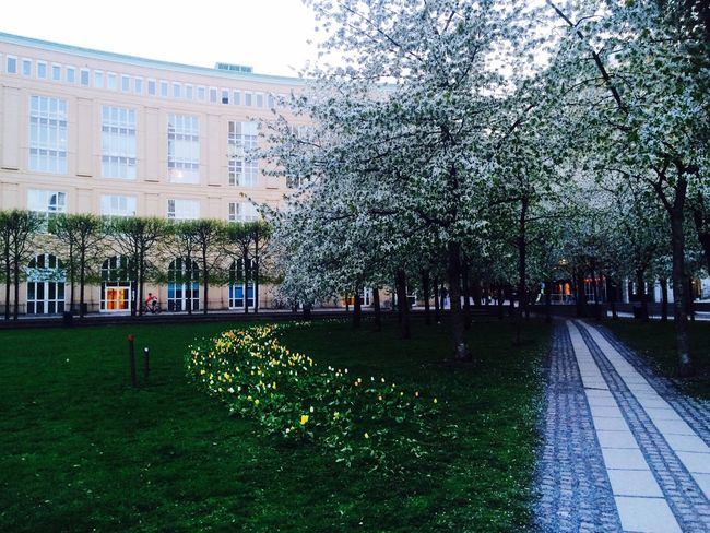 Spring Flowers Spring Södrasidan Stockholm Sweden Sverige