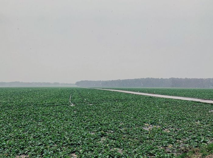 Winter Wedemark Norddeutschland Green Color Growth Plant Land Field Landscape Nature Sky No People Farm Environment