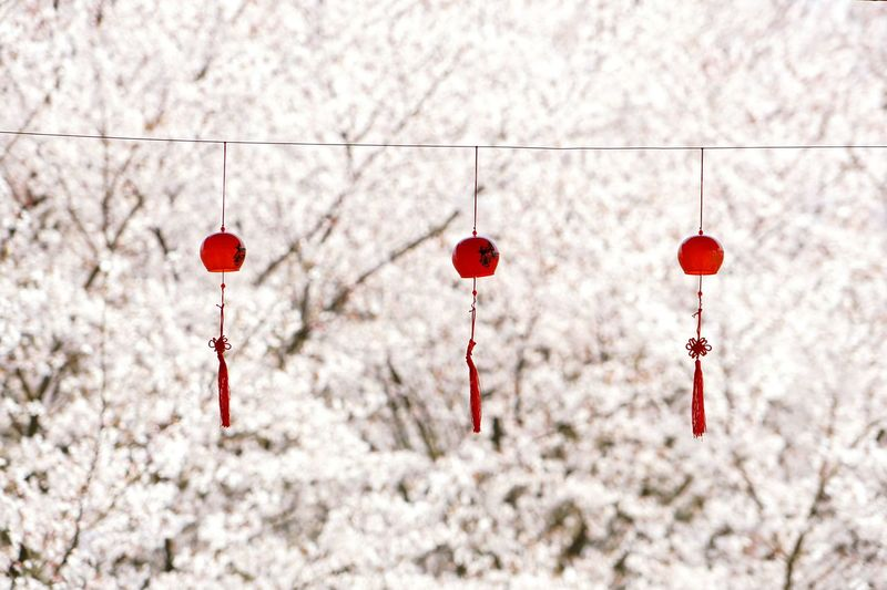 Wind Chimes Hanging On Rope Against Cherry Trees