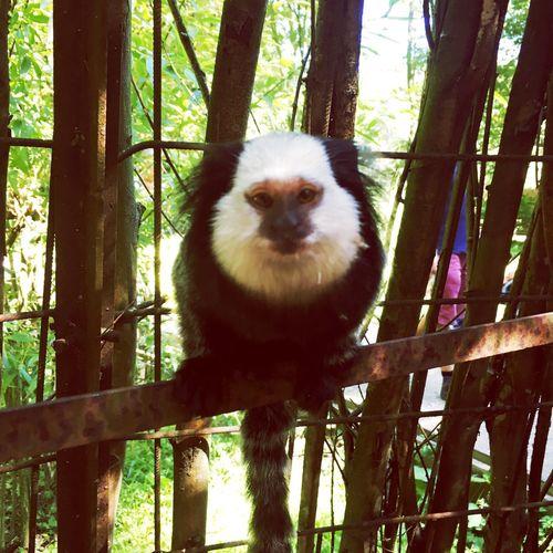 Promenade Planckendael Animals Petites Choses Life Nature