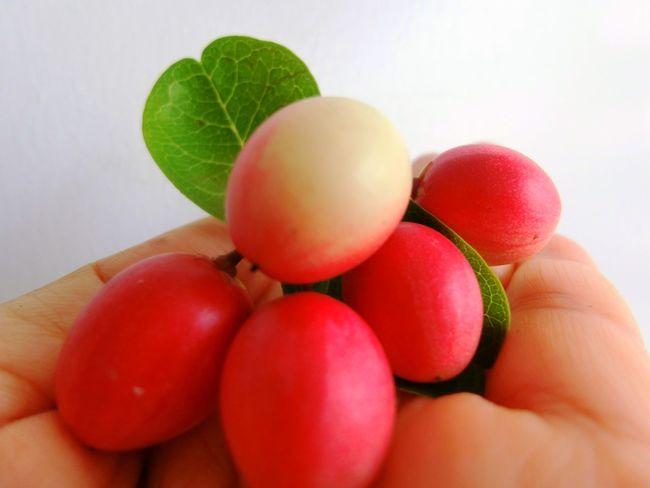 Karoda Fruit Bengal Currant Fruits Red Nature Food Fruit Indoors  Healthy Eating