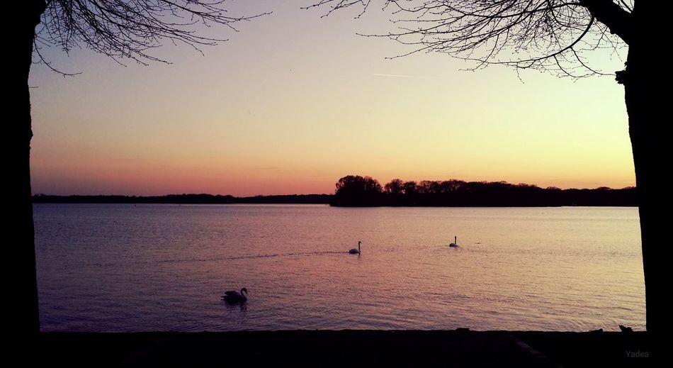 Berlin, Tegeler See ▶ Berlin Tegel Tegeler See Greenwichpromenade Sonnenuntergang Wasser Natur Frühling 2015 Galaxy Note 3 Yadea