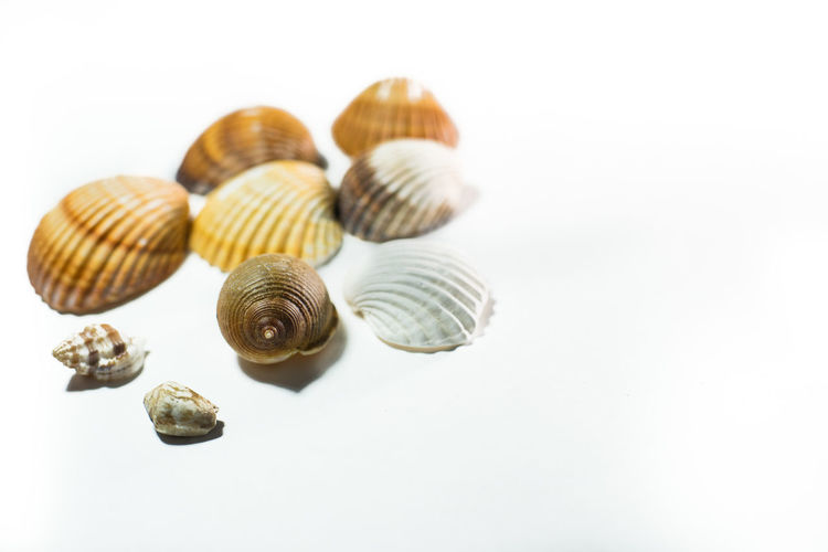 Animal Shell Animal Themes Animals In The Wild Arrangement Close-up Composition Detail Natural Pattern Negative Space No People One Animal Order Organic Ripe Seashell Selective Focus Shell Single Object Snail Textured  Variation Wildlife