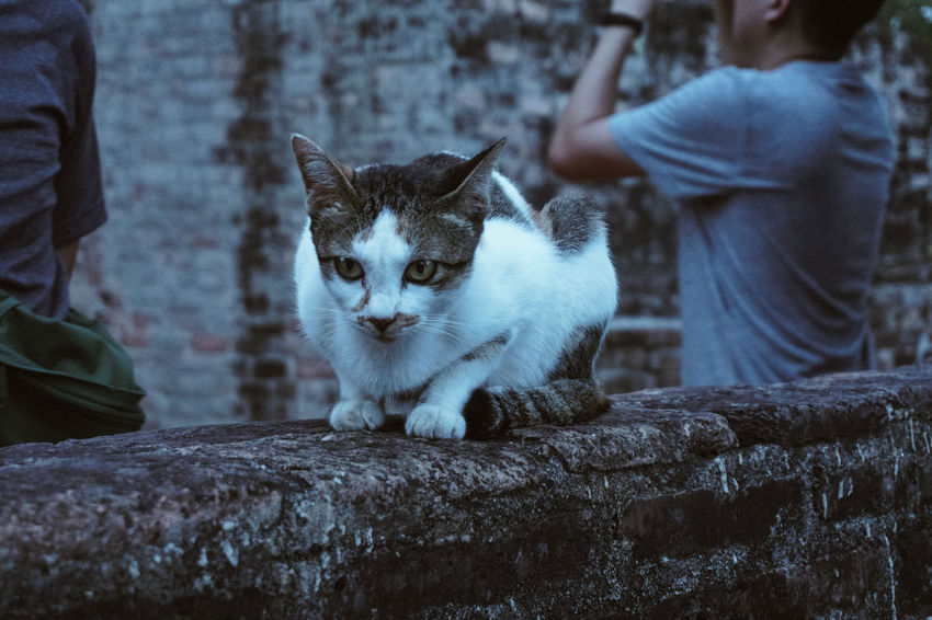 Cat Domestic Cat Pets Feline Mammal Domestic Domestic Animals Vertebrate One Animal Sitting People Day Whisker Looking Real People Selective Focus Outdoors