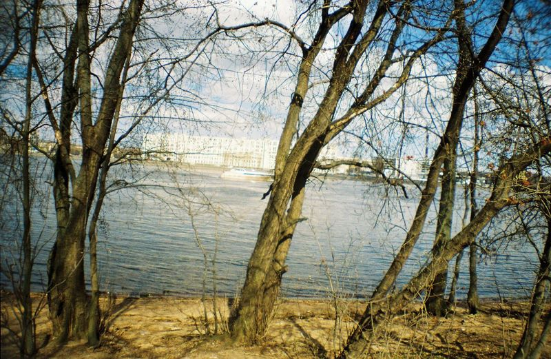 View of bare trees at lakeshore