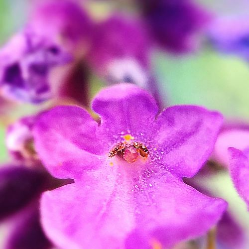 Nature Fleur Flower Lavende Pistil Macro Mobile Photographie Photography Getting Inspired