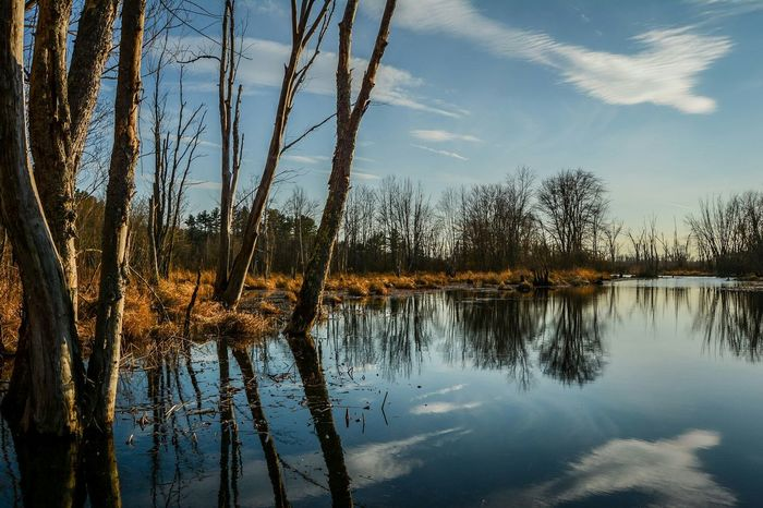 A beautiful spot in the Bolton Flats in Bolton, MA taken in the late afternoon. Relaxing Scenics Atmosphere Brook Vibrant Tranquil Scene Enjoying Life Tranquility Atmospheric Mood Beauty In Nature Nikon Stream D7100 Landscape Water Reflection Trees Balance Composition Majestic Massachusetts Bolton Cloud - Sky Light High Contrast