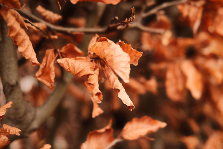 Close-up of wilted plant during autumn