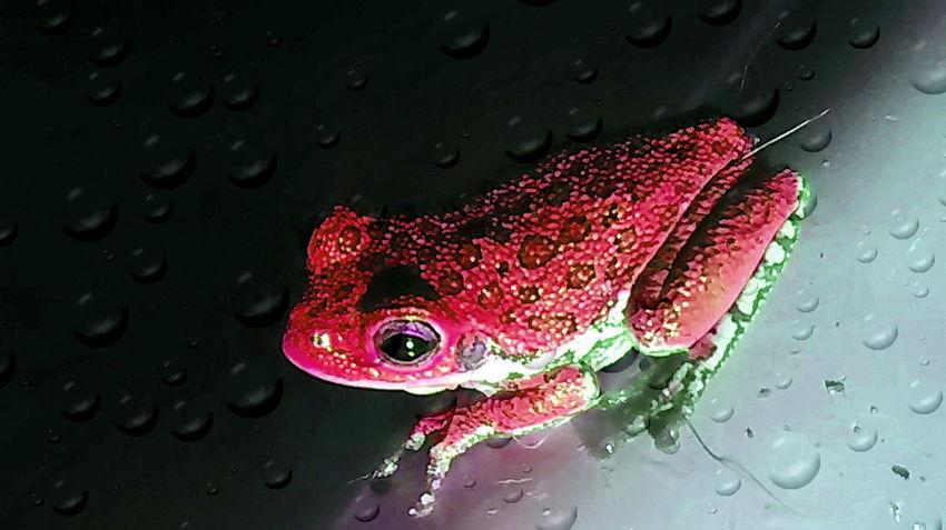 Edited Frog Animal Wildlife Close-up Treefrog
