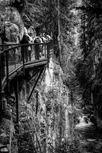 hiking up the winding Johnston Canyon in Banff Water Blackandwhite Monochrome Country River Falls Hiking Park People Trail Tree Sky