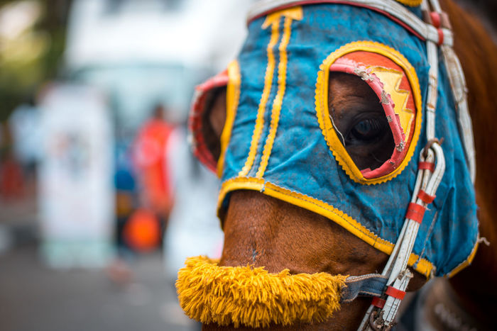 Kuda Delman Transportation Outdoors Travel Animal Horse Photography  Horse Horses Carfreeday Jakarta INDONESIA NX1 City Life Streetphotography Street Life Street Photography Close-up City Domestic Animals One Animal Animal Themes