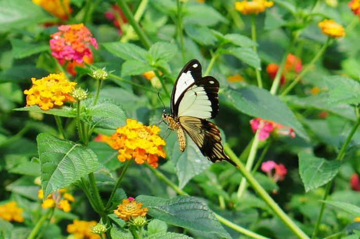 Butterfly And Flowers Beautiful Nature Tropical Paradise Insect Nature Photography Tropical House Open Wings