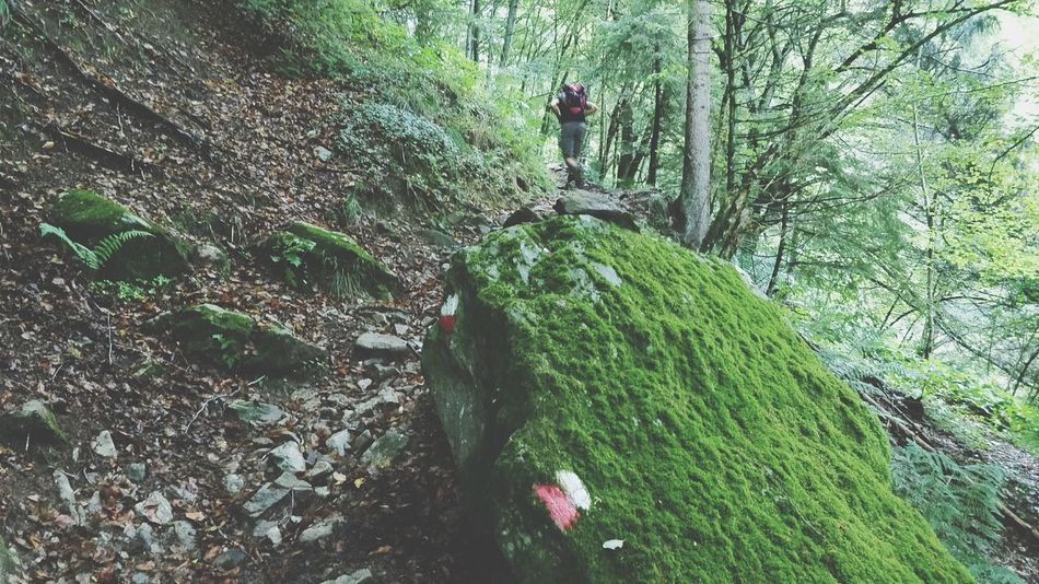 In the woods. Green Color Nature Outdoors High Angle View Backside Portrait Beauty In Nature One Person Walking Woods EyeEm Nature Lover Real People The Week On EyeEm