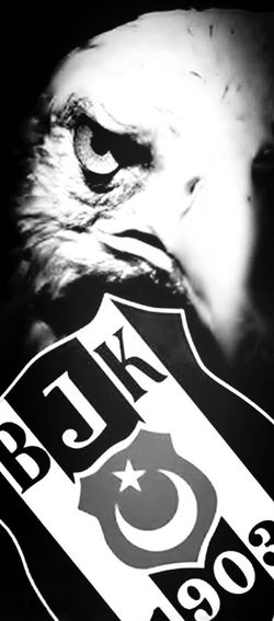 Blackeagle Kill Love Blackandwhite First Eyeem Photo