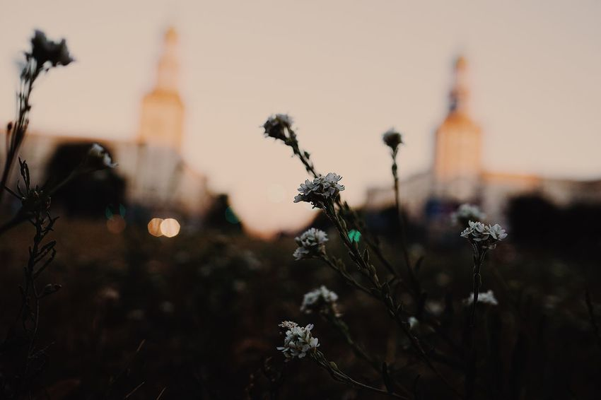 City Life City Berlin The Great Outdoors - 2018 EyeEm Awards EyeEm Selects Plant Focus On Foreground Architecture Built Structure Nature Flowering Plant Sky Flower Building Exterior No People Religion Belief Close-up Freshness Sunset Outdoors Tower Fragility Vulnerability