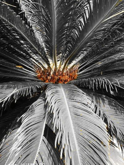Like Fire Palm Tree Tree Close-up Sky Palm Leaf Backgrounds Full Frame Pattern Abstract Backgrounds Detail Tropical Tree EyeEmNewHere Visual Creativity