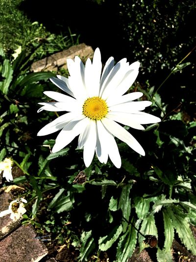 Yellow Flower Head Freshness Flower Nature Growth Petal White Color Beauty In Nature Plant Spring Blooming Freshness Fragility No People Outdoors Close-up Day