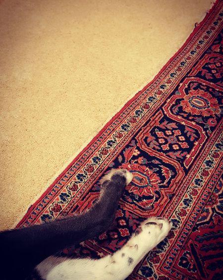 Close-up Indoors  Pets Animal Themes Domestic Animals Dogs Of EyeEm Mixedbreed Mixedbreeddog Huskymix Colliemix