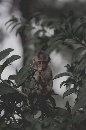 Eating leafs Baby Monkey Wild Animal Monkey Animal Wildlife Plant Part Leaf Plant One Animal Animals In The Wild Mammal Young Animal