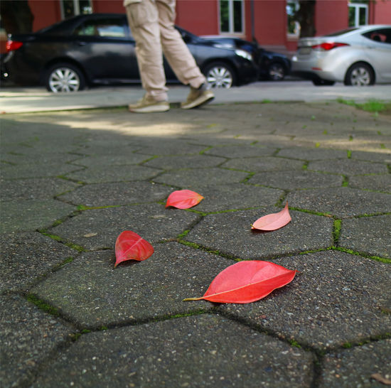 Red leaves on footpath in city
