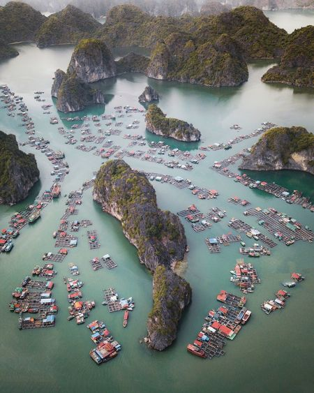 Floating fishing village off the coast near Cat Ba Island No People High Angle View Animal Day Close-up Indoors  Nature Water Animal Themes Sea Creativity Art And Craft Animal Wildlife Pattern Beauty In Nature Animals In The Wild