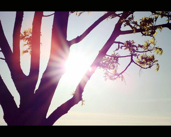 Sommer2014 Sonne Nature