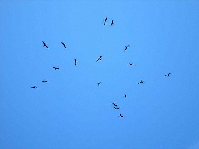 Balé nos ares (Parte 1) Riodejaneiro RJ Errejota  Jardimbotanico Passaros CeuAzul Bird Photography Blue Sky EyeEm Nature Lover EyeEm